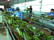 越南与荷兰将开展农产品收获后技术应用与开发领域上的合作