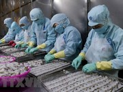 31家公司输美虾类产品将享受零关税