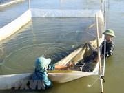 中部四省渔业后勤服务和水产资源项目使用Formosa的补偿金