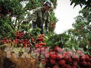 海阳省可出口具有可追溯性的荔枝产品