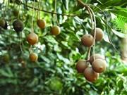 越南林同省一家公司向韩国与新加坡出口10吨澳洲坚果