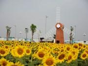 首德郡向日葵花田颇受西贡市民的青睐
