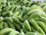 香蕉预计将成为老挝的主要出口农产品