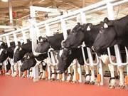 越南牛奶产量在东盟地区排名第二