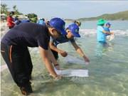 放养鱼苗 助力芽庄湾渔业资源恢复