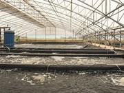 广治省注重建设虾类重点养殖区