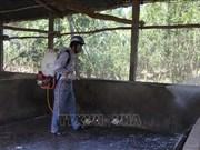 河内等省市对有效防控非洲猪瘟措施进行探讨