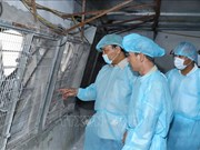 阮春福总理:整个政治系统必须参与非洲猪瘟疫情防范工作