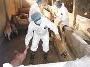 全国各地多措并举全力做好非洲猪瘟防控工作