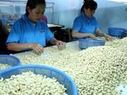 科特迪瓦希望与平福省加强腰果加工的合作
