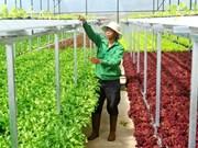 巴地头顿省大力吸引对高新技术农业的投入