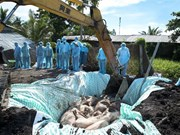 政府总理对非洲猪瘟防控工作做出重要指示