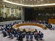 埃及专家:当选安理会成员国后,越南将在国际论坛上做出应有贡献