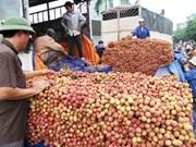 越南对中国出口1.1万多吨荔枝
