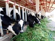 林同省努力发展奶牛养殖业