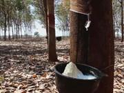 马来西亚4月份天然橡胶产量减少30%以上