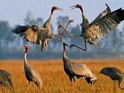 越南敲响生物多样性丧失的警钟