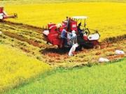 九龙江三角洲需加大农业结构重组工作