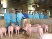 越南非洲猪瘟疫苗研究取得积极成果