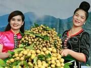 山罗省已对12个国际市场出口10.6万多吨水果