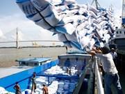 世界大米市场:越南与印度和泰国大米继续激烈竞争