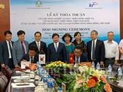 韩国助力越南改善稻米价值链   提高人民群众收入水平
