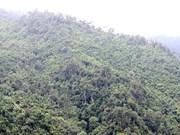 老街省林木覆盖率高于全国平均水平