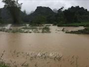 高平省出现强降雨  导致900多间房子被淹  部分水稻和农作物受损