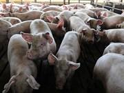 非洲猪瘟疫情继续肆虐全国各地