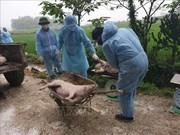 河内市非洲猪瘟疫情新增速度放缓