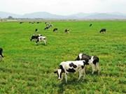 推动奶牛养殖业发展  进一步扩大出口力度