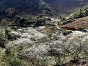 和平省对杭基和帕戈开展旅游投资促进工作