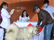 年初至今越南狂犬病死亡病例46例