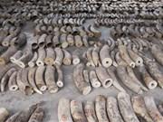 新加坡将从2021年起全面禁止国内象牙制品交易