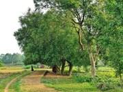 组图:唐林古村拥有一千年历史的古鹊肾树群