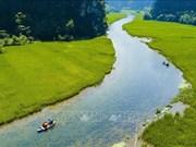 组图:宁平省三谷稻田收割季节的美丽景色