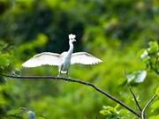 组图:宁平省:保护生物多样性 守住大自然环境