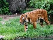 共同携手助力保护老虎
