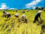 东盟将加强合作确保粮食安全