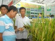 2010年国际农业农业在同奈省举行