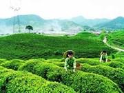 价格上涨使茶叶出口金额上升