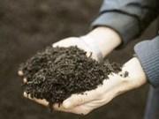 越南金瓯省使用有机垃圾堆制肥料