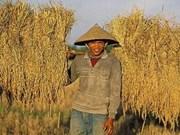 """越南协助老挝制定""""三农""""战略"""