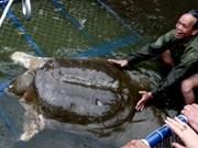 成功牵引还剑湖巨龟到治疗池