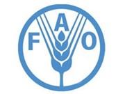 粮食安全依然是联合国粮农组织首要考虑问题