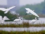 九龙江三角洲注重湿地保护工作
