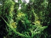 越南坚江省富国国家公园发现新动植物