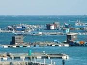 坚江省富国岛发展网箱养鱼模式