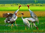 越南公布2011年生物多样性国家报告