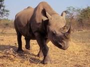 严禁非洲大象和犀牛的标本进出口和买卖活动